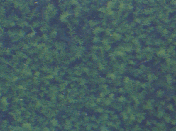 Hanimex Hanimar M.C. auto f=28 1:2.8; Blende 5.6; Bildmitte; 100% Ausschnitt.